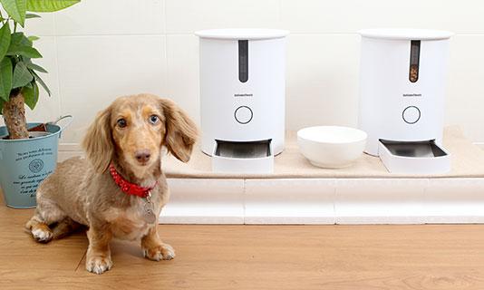 カリカリマシーンECOイメージ画像/犬