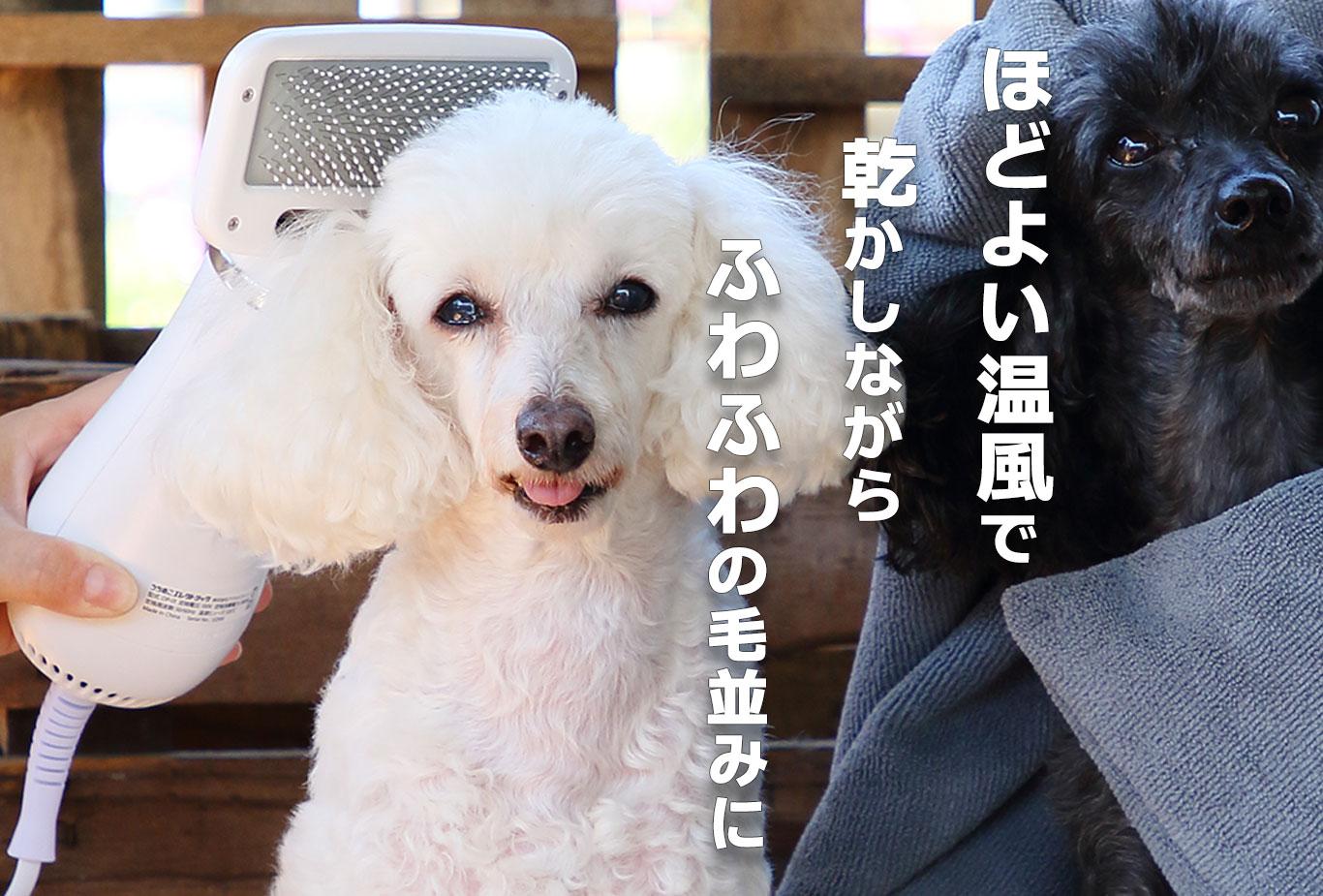 ほどよい温風で乾かしながらふわふわの毛並みに。犬 画像