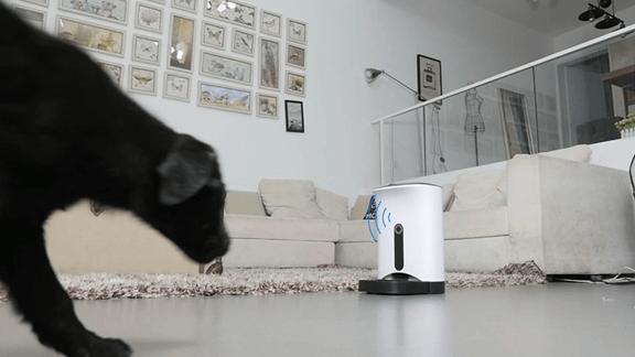 カメラ付きスマホ遠隔給餌器カリカリマシーンSPがすごい便利!!